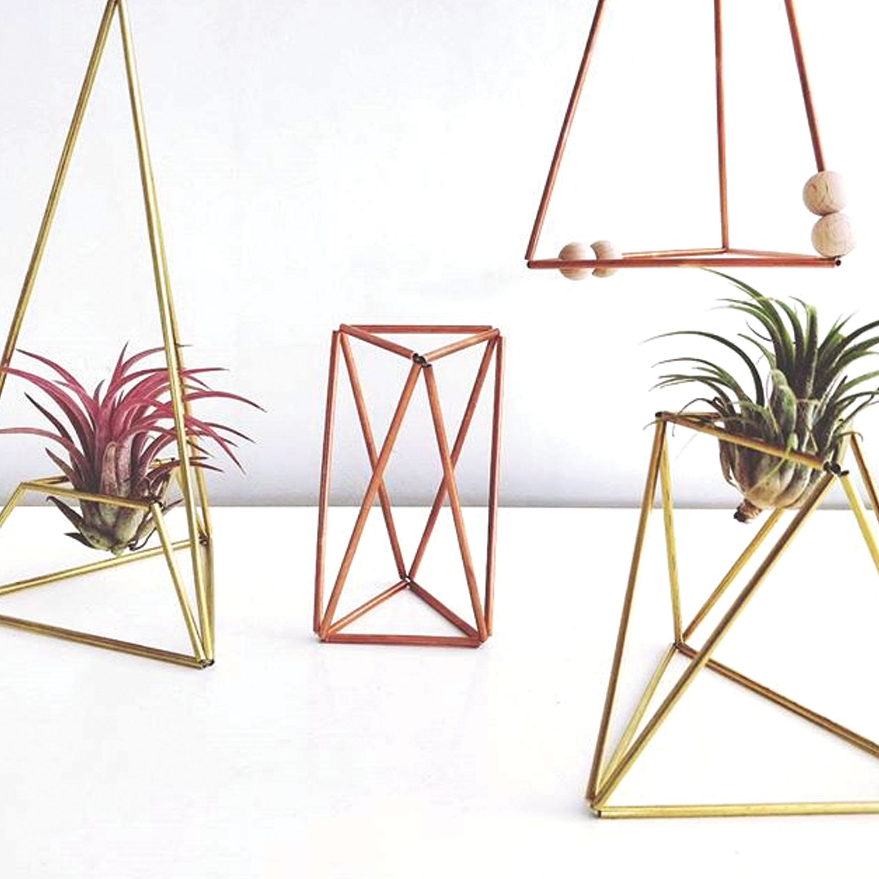 airplants by groen